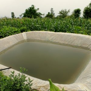 Rainwater Harvesting to Repel Water Scarcity